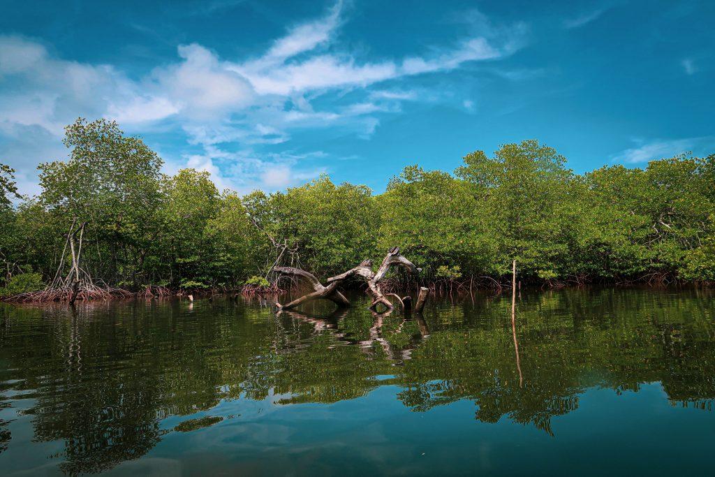 mangrove-2253